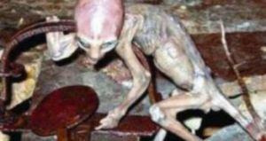 alienBEBE
